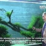 Phụ kiện bể thủy sinh phong cách tự nhiên Amano