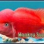 Red Shock (RS), Super Red (SR), Super Red Synspilus (SRS), Khỉ đỏ = Red Monkey (RM), Supreme