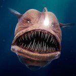 Dưới biển sâu 200 m, vẫn có hàng chục ngàn loài sinh sống