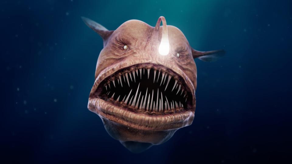 sinh vật dưới đáy biển