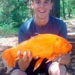 Cậu bé người Anh câu được cá vàng nặng gần 2,3 kg