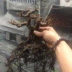 Đất cho bonsai