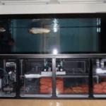 Hệ thống lọc cho cá rồng