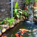 Hồ nuôi cá Koi
