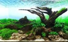 Tự thiết kế hồ thủy sinh đẹp
