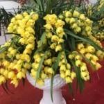 Tìm hiểu về hoa lan