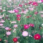 Cách giữ hoa tươi lâu tàn