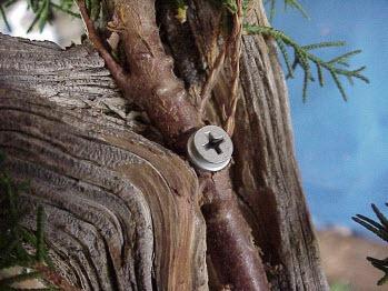 Cách tạo bonsai Tanuki bước 7b