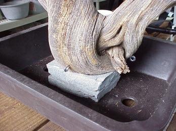 Cách tạo bonsai Tanuki bước 8