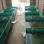 Cách thay nước hồ cá