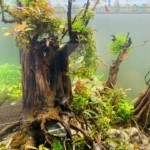 Những hiểu biết mối về quang phổ cho cây thủy sinh