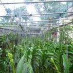 Cách tưới nước và bón phân cho lan