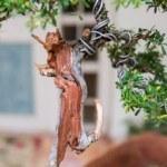 Cách uốn những nhánh cây lớn hoặc dễ gãy (Phần 1)